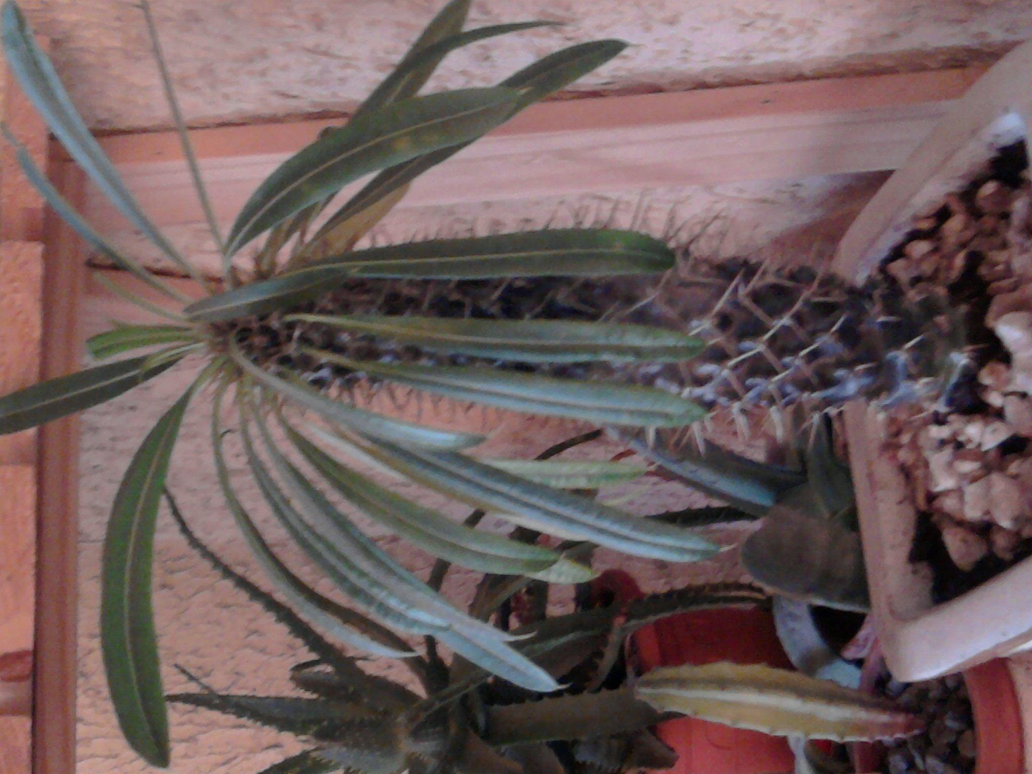 cactus et succulentes cactophilestory. Black Bedroom Furniture Sets. Home Design Ideas